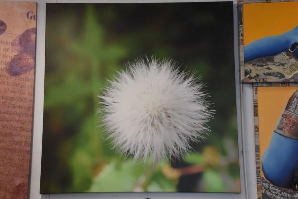 Pusteblume 119 x 119 cm, gebraucht